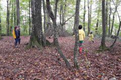 Jeux libres en forêt