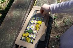 création d'un cadre végétal